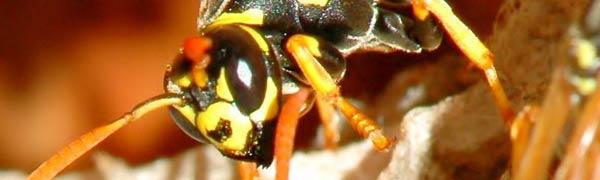 Pest Control Wimbledon