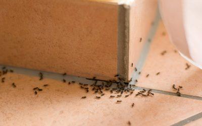 Is Your Garden Overrun With Ants?