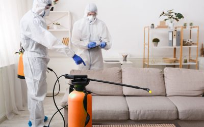 What To Expect From A Good Pest Firm